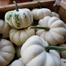 Pumpkin Patch Greenville Nc by Porter Farms And Nursery Home Facebook