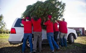 Leyland Cypress Christmas Tree Farm by Where To Cut Your Christmas Tree Fresh From The Farm The