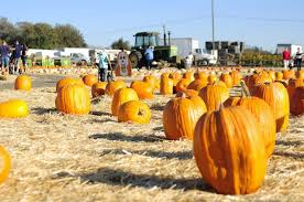 Pumpkin Patch San Jose 2015 by Choosing To Cherish Spina Farm Pumpkin Patch