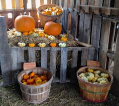 Heather Farms Pumpkin Patch by Waimanalo Country Farms Home Facebook