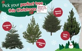 Incredible Design Ideas Type Of Christmas Trees Decorated In India Artificial Fresh Best Live