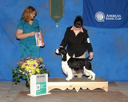 Field Springer Spaniel Shedding by Award Winning Grooming At Morning Star Farm Pet Resort Thompson Ct