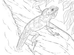 Click To See Printable Version Of Realistic Chinese Water Dragon Coloring Page