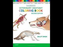 Download Veterinary Anatomy Coloring Book 2e PDF