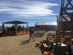 Pumpkin Patches Near Colorado Springs Co by Lost In The Corn At Anderson Farms Erie Pumpkin Patch And Corn