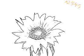 Mandala Fleur Coloriage Tournesol Vecteur Pour Les Adultes