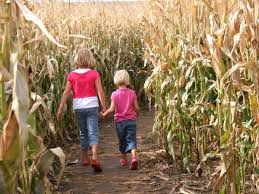 Pumpkin Patch Homer Glen Il by Sep 14 Special Needs Day At Konow U0027s Corn Maze Homer Glen