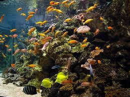musee de la porte doree aquarium tropical de la porte dorée 12e l officiel des