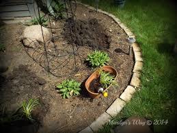 planting liatris marilyn s way