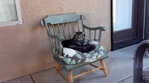 Making A Cat Bed Out Of Old Rocking Chair - YouTube