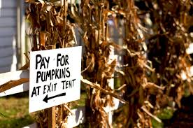 Pumpkin Picking Nj by Pumpkin Patches In New Jersey Funtober