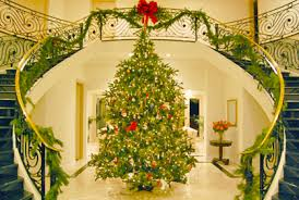 Best Type Of Christmas Tree by How Many Types Of Christmas Trees Are There Photo Albums Catchy