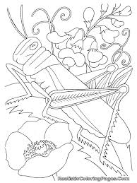Bug Coloring Pages Grasshopper