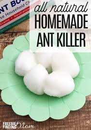 How To Get Rid Ants Overnight Homemade Ant Killer my Mom
