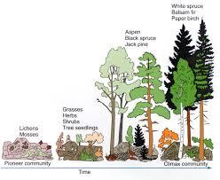 Ceiling Radiation Damper Wiki by 12 Define Carbon Sink Forest Amazon Carbon Sink Is In