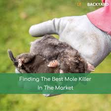 The 5 Best Mole Killers + Reviews & Ratings! (Dec, 2017) How To Get Rid Of Moles Organic Gardening Blog Cat Captures Mole In My Neighbors Backyard Youtube Animal Wikipedia Identify And In The Garden Or Yard Daily Home Renovation Tips Vs The Part 1 Damaging Our Lawn When Are Most Active Dec 2017 Uerstanding Their Behavior Mole Gassing Pests Get Correct Remedy Liftyles Sonic Molechaser Alinum Covers 11250 Sq Ft Model 7900