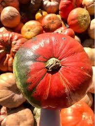 Carmichaels Pumpkin Patch Oklahoma by Halloween Brown Eyed U0026 Blushing