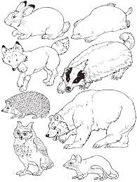 Coloring Pages Winter Animals Marvelous