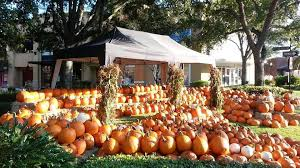 Sarasota Pumpkin Festival 2017 by Off Fall In Tampa At The Fall Festival In Hyde Park Village