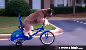 Bike Riding Dog Goes For A Ride