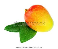 New Mango Stock s Royalty Fresh mango fruit with green leaves