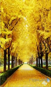 Wall Mural Decals Nature by 3d Autumn Tree Yellow Leaves Corridor Entrance Wall Mural Decals