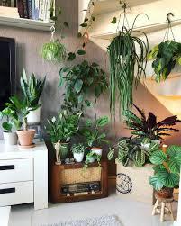 zehn neue gedanken über dschungel deko wohnzimmer die ihre