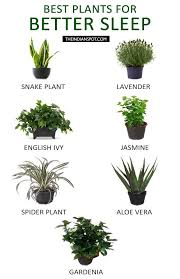 Plants For Bathrooms With No Light by Best 25 Best Plants For Bedroom Ideas On Pinterest Plants