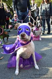 Tompkins Square Park Halloween Dog Parade 2015 by 171 Best Dogs U0026 Halloween Images On Pinterest Nyc The O U0027jays