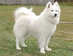 Cute Non Hypoallergenic Dogs by Dogs For People With Allergies Finding A Pet That Won U0027t Make You Sick