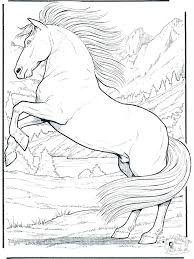 Coloring Pages Of Horses Realistic Horse On Animal