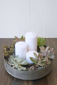 Dining Room Centerpiece Ideas Candles by Kitchen Simple Cool Colorful Succulents Succulent Plants