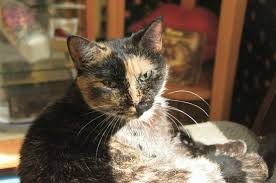 mountain cat smoky mountain cat house pigeon forge tn top tips before you