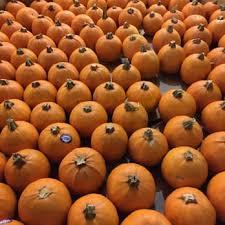 Nearest Pumpkin Patch Shop by Pasadena Pumpkin Patch 102 Photos U0026 67 Reviews Pumpkin Patches
