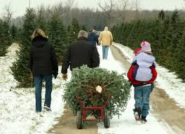 Sugar Or Aspirin For Christmas Tree by Tips For Choosing And Caring For A Christmas Tree Pro Com
