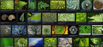 100 Natural Geometry On The Beauty Of Nature And The Nature Of Beauty Predict