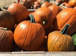Northeast Iowa Pumpkin Patches by Vesperman Farms Home