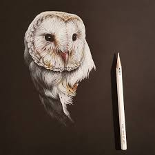 Started A Barn Owl On The Black Paper Today :) Ref Photo By Paul ... Black Barn Owl Oc Eclipse By Pkhound On Deviantart Closeup Of A Stock Photo 513118776 Istock Birds Of The World Owls This Galapagos Barn Owl Lives With Its Mate A Shelf In The Started Black Paper Today Ref Paul Isolated On Night Stock Photo 296043887 Shutterstock Stu232 Flickr Bird 6961704 Moonlit Buttercups Moth Necklace Background Image 57132270 Sd Falconry Mod Eye Moody
