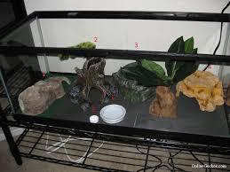 new leopard gecko slate tile basic leopard gecko tank setup
