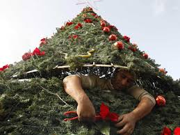 Christmas Trees Types Uk by Why Are Christmas Trees Triangle Shaped Business Insider