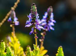 verpiss dich pflanze schützt das gartenbeet vor ungebetenen
