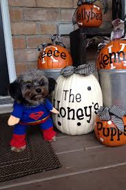 10 Best Jack O Lantern Displays U2013 The Vacation Times by 10 Best Canine Crime Fighters Images On Pinterest Carpets