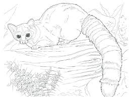 Realistic Animal Coloring Pages Tic Sheets Picture Collection Printable