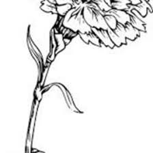 Picture Of Carnation Flower Coloring Page Sun