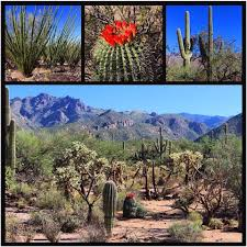 Marana Pumpkin Patch Field Trip by Sunday Hike In Sabino Canyon Tucson Arizona Nature Hiking