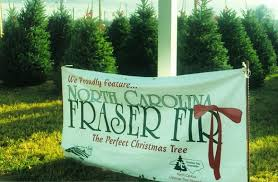 Fraser Christmas Tree Care by Where To Buy Your Real Christmas Tree Nc State Extension