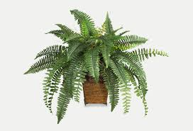 Home Decor Shop By Category Artificial Plants