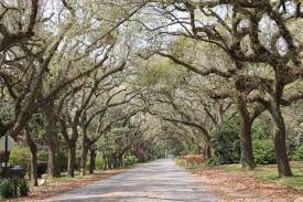 Christmas Tree Lane Ceres Ca Address by Alabama Allison Puccetti Adams