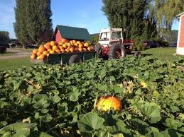 Pumpkin Patch Nashville Area by Best 25 Best Pumpkin Patches Ideas On Pinterest Local Pumpkin