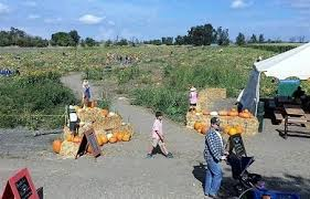Pumpkin Patches Near Chico California by Pumpkin Patch Orland Ca